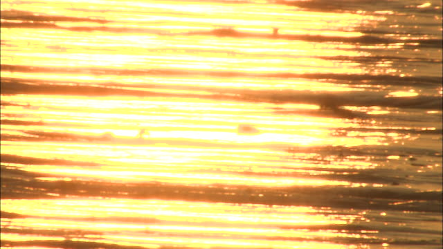 silhouette of mudskipper jumping and swimming across tidal flat in sunset haze,sea of ariake, japan - ariake sea stock videos and b-roll footage