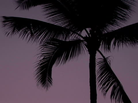 la silhouette of palm tree against sky, the big island, hawaii, usa - fan palm tree stock videos & royalty-free footage