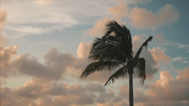 Silhouette of palm tree blowing in the wind in against backdrop of clouds and sky in Key West, Florida