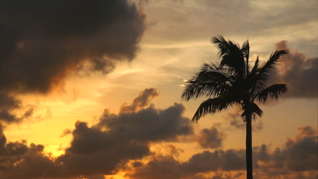 vidéos et rushes de silhouette of palm tree blowing in wind against dramatic sunset sky - key west, florida - palmier