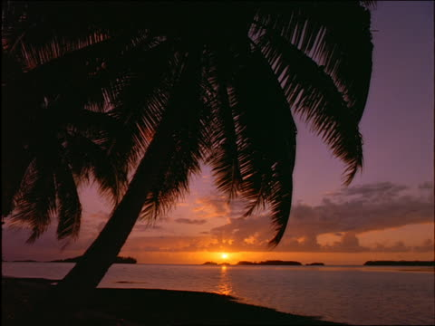 Silhouette of palm tree on beach at sunset