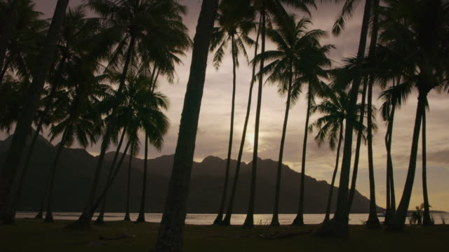 silhouette of palm trees on tropical beach at sunset / moorea, french polynesia - moorea stock videos and b-roll footage