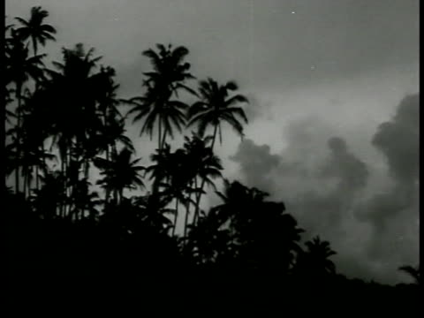 stockvideo's en b-roll-footage met silhouette of palm trees vegetation xws five airplanes in sky above jungle us soldiers in fox hole using rangefinder us soldiers standing in clearing... - 1943
