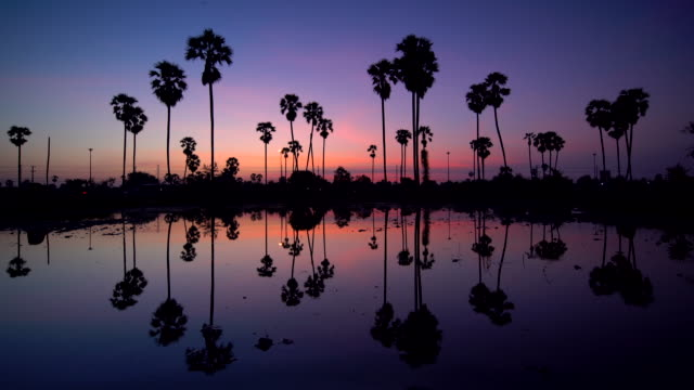 silhouette of palms on tropical sunset - bali stock videos & royalty-free footage