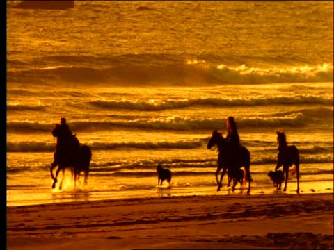 silhouette of people riding horses + dogs running on beach / orange filter - pflanzenfressend stock-videos und b-roll-filmmaterial