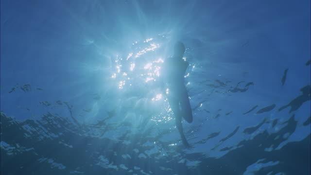 slo mo ws silhouette of person swimming underwater against sunrays / moorea, tahiti, french polynesia - territori francesi d'oltremare video stock e b–roll