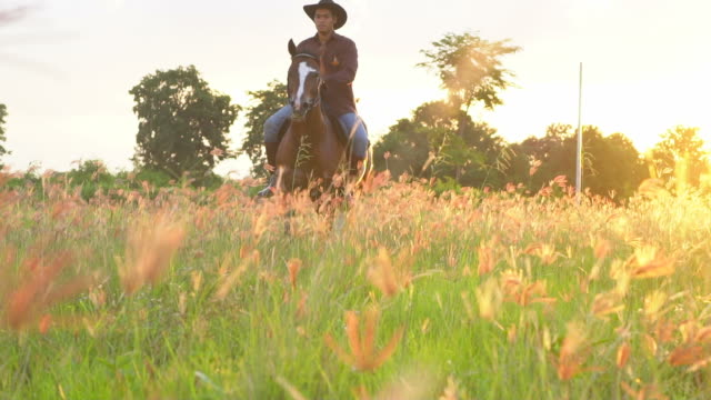 silhouette of rider on horse at land field in sunset light. - jockey stock videos and b-roll footage