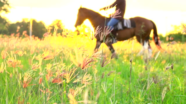silhouette of rider on horse at land field in sunset light. - andare a cavallo video stock e b–roll