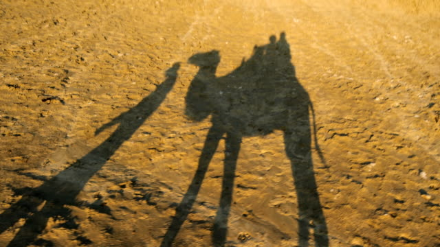 silhouette of riding camel in wildness area - camel stock videos & royalty-free footage