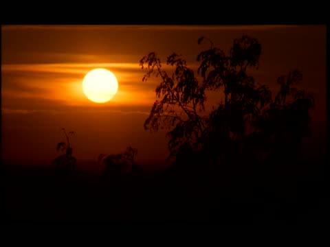 stockvideo's en b-roll-footage met ms, silhouette of tree against orange sky at sunset, cambodia - kleurtoon