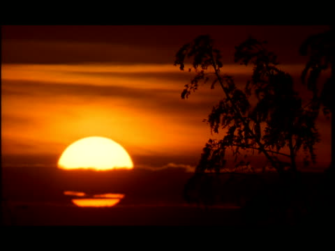 ms, silhouette of tree against orange sky at sunset, cambodia - 50 seconds or greater stock videos & royalty-free footage