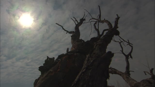 ms, la, silhouette of treed with clouds moving in blue sky and sun shining behind, south africa - the karoo stock videos & royalty-free footage