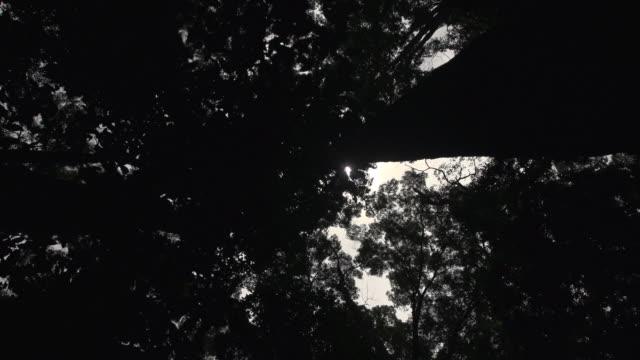 vídeos de stock, filmes e b-roll de silhouette of trees shot - arbusto tropical