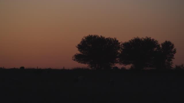 ws silhouette of tress at dusk / south dakota city, south dakota, usa. - south dakota stock-videos und b-roll-filmmaterial
