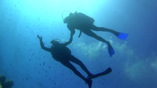 LA / WS / SLO-MO Silhouette of two divers in the blue
