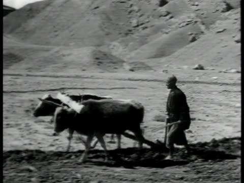 silhouette off iranians walking w/ cattle on rocky mountainous terrain vs farmer plowing terrain w/ cattle ws train pulling oil cars over bridge ha... - iran video stock e b–roll