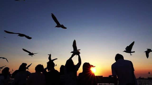 silhouette people and bird at beautiful sunset - gruppo di animali video stock e b–roll