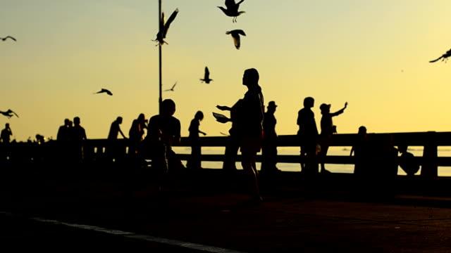 vidéos et rushes de silhouette :  personnes et mouette sur un pont au coucher de soleil - étaler