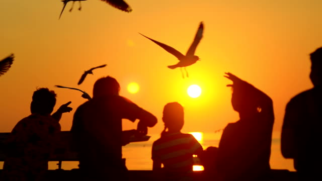 vidéos et rushes de silhouette :  les mouettes se nourrir dans un port au coucher de soleil - étaler