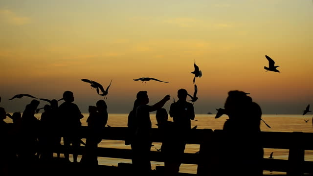 Silhouette: people feeding Seagull on a port at sunset