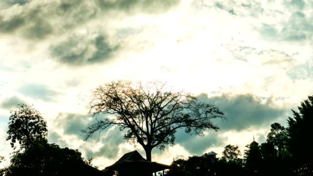 silhouette-szene von kahler baum und bewölkten himmel, zeitraffer-video - bare tree stock-videos und b-roll-filmmaterial