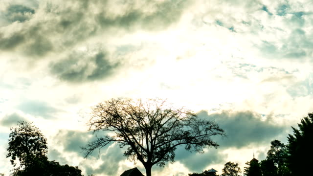 silhouette scene of bare tree and cloudy sky, time lapse video - bare tree stock videos & royalty-free footage