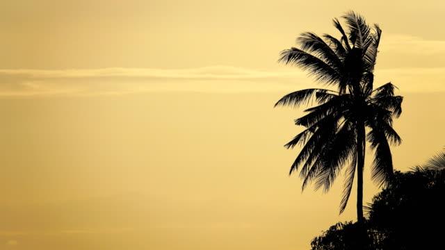 4k: silhouette scene of coconut tree. - palm tree stock videos & royalty-free footage