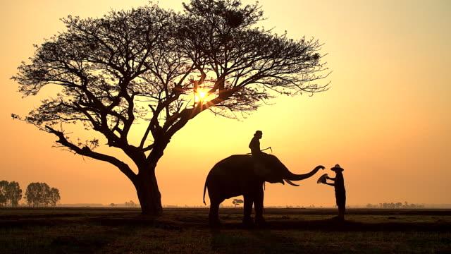象と象使い霧日の出で旅行者に帽子を送ることによって彼のパフォーマンスを示すのシルエットのシーン。 - サファリ点の映像素材/bロール
