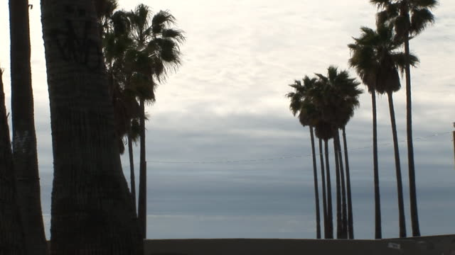 (HD1080i) Silhouette Skateboarder Passing Palm Trees