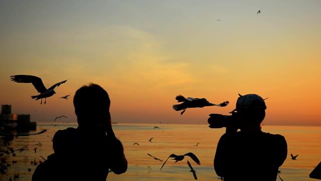 vidéos et rushes de silhouette :  voyageurs et mouette au coucher de soleil - étaler