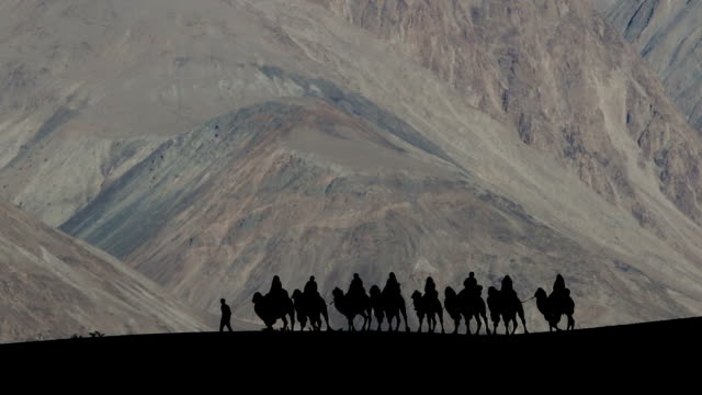 silhouetted camel - camel stock videos & royalty-free footage