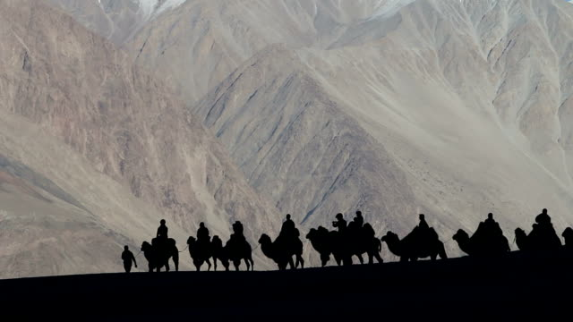 Silhouetted camel