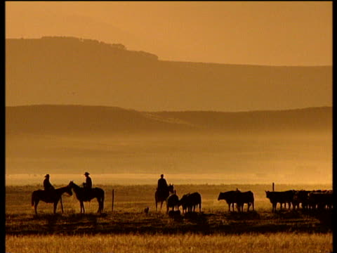 Silhouetted cowboys and cattle on the plains cattle on field and two silhouetted cowboys on horses with dog under yellow sky Wyoming