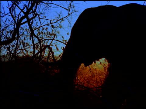 Silhouetted elephant eating in bush land under blue sky, Botswana