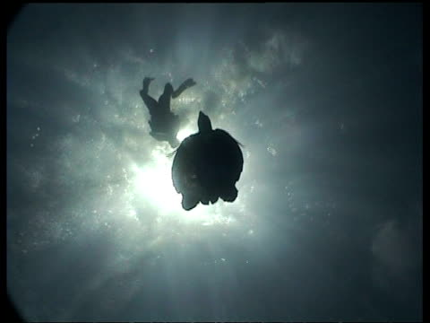 wa silhouetted hawksbill turtle and diver swim overhead, sun in background, turtle descends, low angle, layang layang, malaysia - 潜水ボンベ点の映像素材/bロール