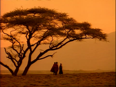 wa silhouetted masai tribesmen standing under large tree, against dusk sky, tanzania - tanzania stock videos & royalty-free footage