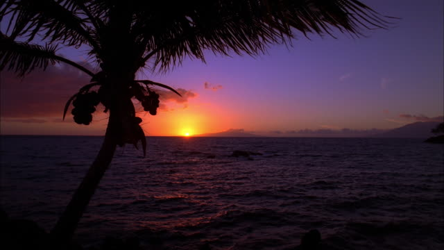 silhouetted palm fronds blow gently in breeze as sun sets against purple blue sky, maui available in hd. - hawaii islands stock videos & royalty-free footage