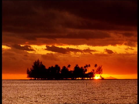 vidéos et rushes de silhouetted palm trees contrast with a flame-colored sky. - océan pacifique sud
