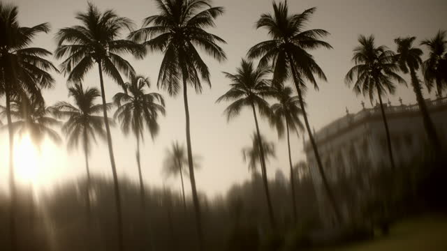 silhouetted palm trees outside grand building, india - kolkata stock videos & royalty-free footage