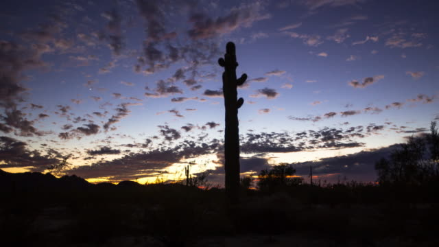 Silhouetted Saguaro Cacti at Desert Sunset - Time Lapse
