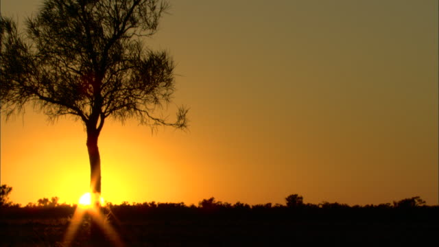 a silhouetted tree contrasts with the golden sky. - horizon over land stock videos & royalty-free footage