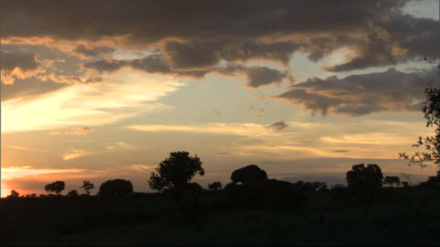 Silhouetted trees against dusk sky, with audio, Kenya, Africa