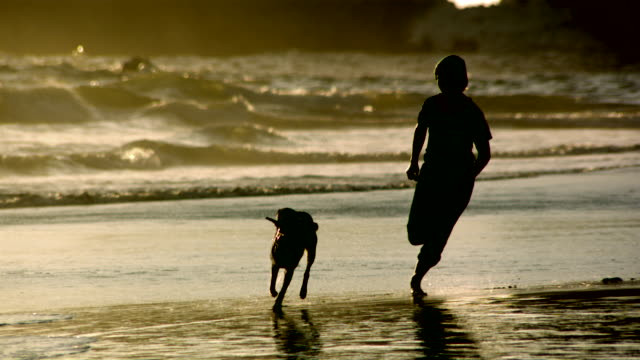 ms slo mo  pov silhouetted woman chasing her dog on beach at sunset /  washington, united states - chasing stock videos & royalty-free footage