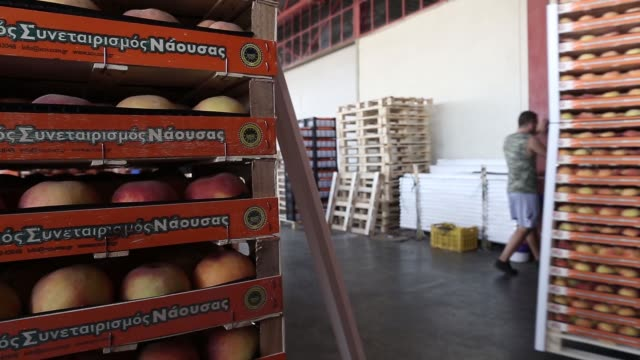 silhouetted workers arrange pallets with crates of peaches and nectarines ready for shipment at the processing facility operated by the agricultural... - agricultural cooperative stock videos and b-roll footage