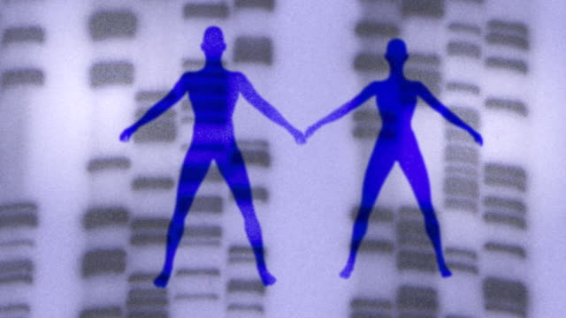 vídeos de stock e filmes b-roll de silhouettes of a man and woman drift apart and come back together against a background of dna. - investigação genética