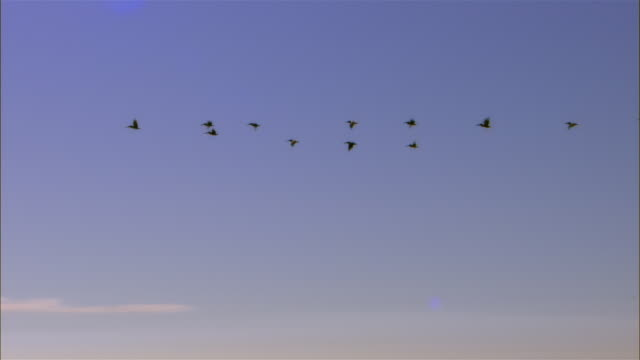 ws, silhouettes of birds flying in v formation above ocean, key west, florida, usa - birds flying in v formation stock videos and b-roll footage