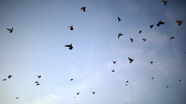 silhouettes of birds flying on the blue sky - flock of birds stock videos & royalty-free footage