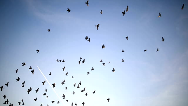 silhouettes of birds flying on the blue sky - formation flying stock videos & royalty-free footage