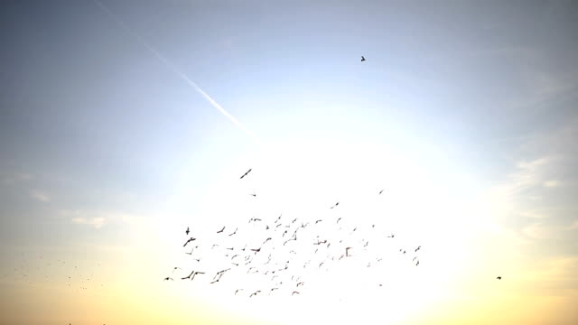 silhouettes of birds flying on the blue sky - oca uccello d'acqua dolce video stock e b–roll