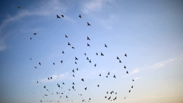 silhouettes of birds flying on the blue sky - raven stock videos & royalty-free footage